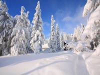 Pucova chata v zime